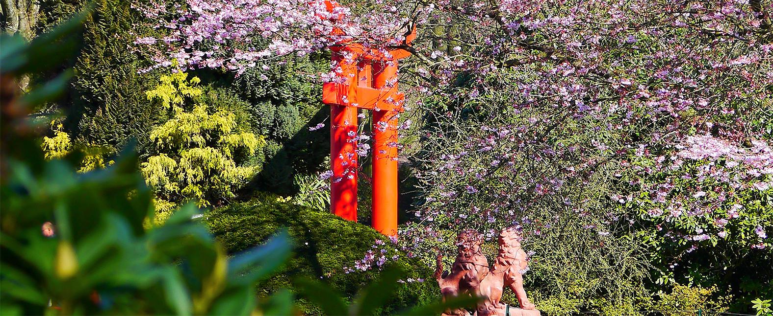 japon nature